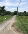 bán đất xây nhà trọ tại bến lức gần chờ gò đen, chính chú, shr